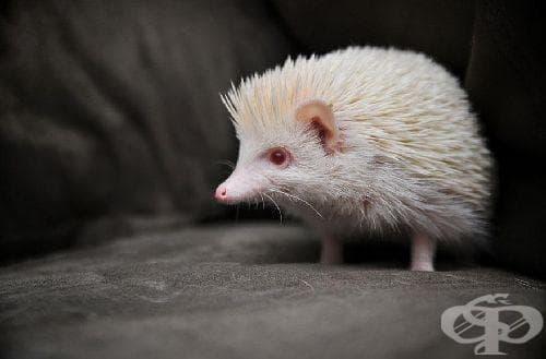 Когато природата изчерпа запасите си от боички: Животни албиноси - изображение