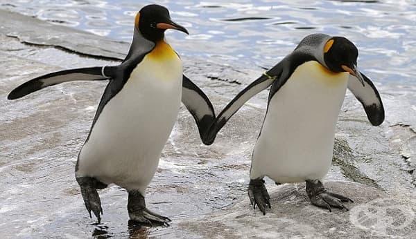 Защо много животински видове демонстрират хомосексуално поведение? - изображение