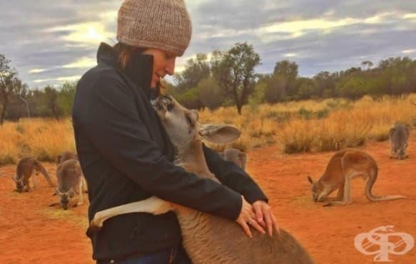 8 животни, които не забравят да благодарят на спасителите си - изображение
