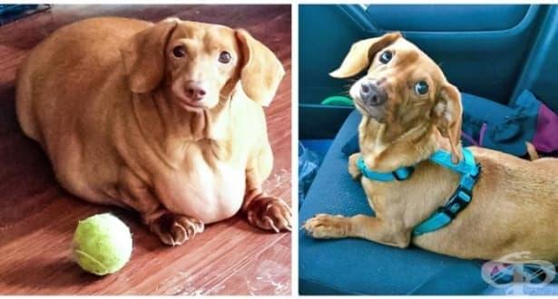 Щастливи и слаби: Животните, които свалиха драстично килограми - изображение