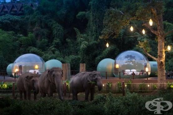 Да спиш в балон в джунглата, заобиколен от слонове – вече е възможно в Тайланд - изображение