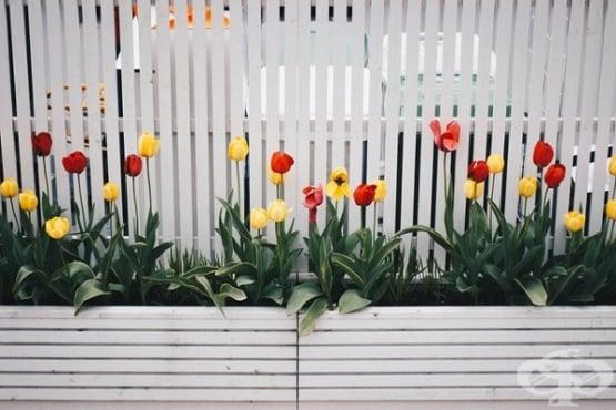 Как да си направите цветна градина у дома - изображение