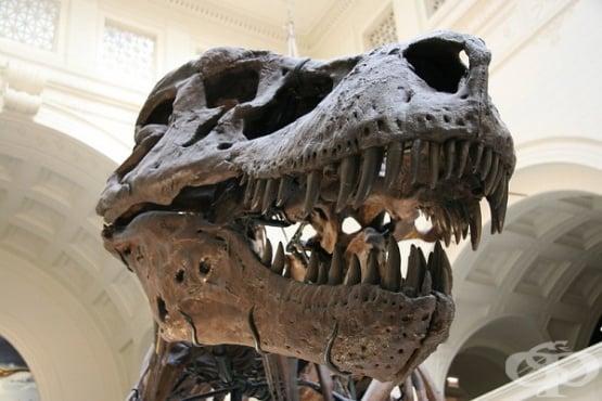 Как учените изчисляват броя на тиранозаврите  и вероятността да се превърнат във фосили - изображение