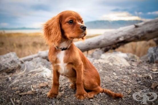 6 неща за истинската любов, които можем да научим от кучетата - изображение