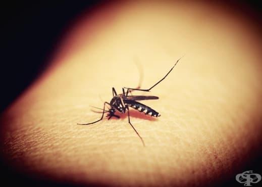 Защо комарите хапят някои хора по-често от други - изображение