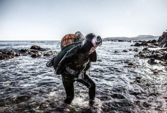 Корейските русалки Haeneyo, които изкарват прехраната си като се гмуркат в ледените води - изображение