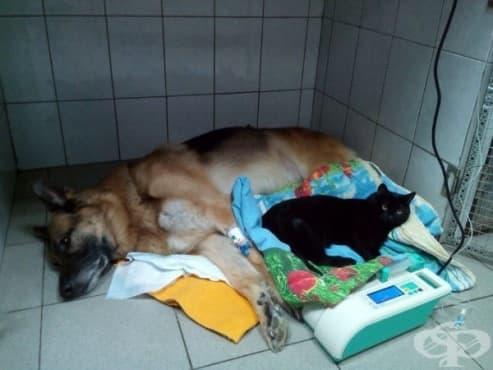 Коте инвалид се грижи за болни животни във ветеринарна клиника - изображение
