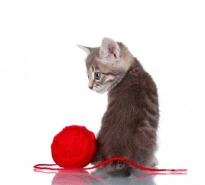 Котешка терапия: Ефективното предписание против стреса (Видео) - изображение