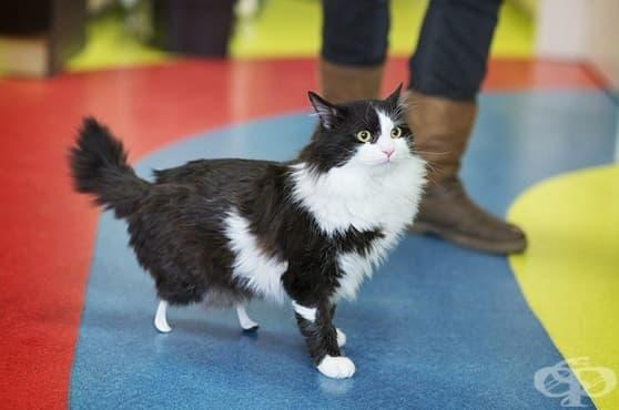 Български ветеринар дарява нови бионични крачета на пострадало коте - изображение