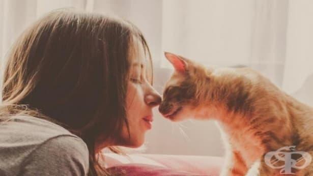 Любимото нещо на вашата котка е да общува с вас - изображение