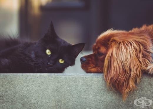 Кучетата или котките са по-умни - изображение