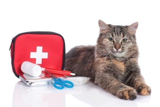 Как да си направите свой собствен комплект за първа помощ за вашата котка - изображение