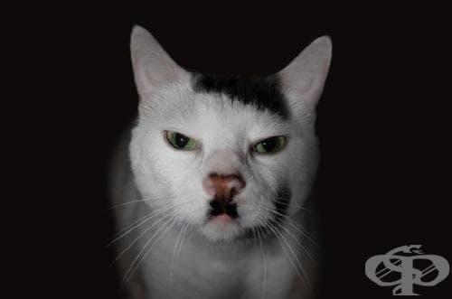 10 котки, които станаха известни в интернет с уникалните си шарки - изображение