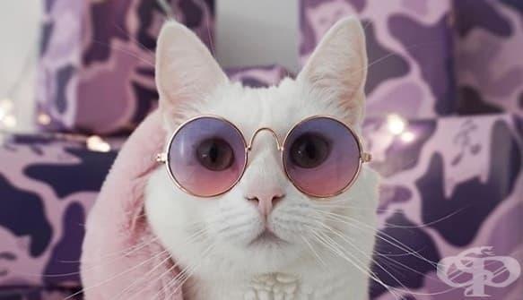 Заппа – котката със собствен марков гардероб, която ще ви очарова - изображение
