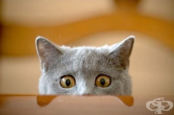 12-те най-типични черти на всички котки - изображение