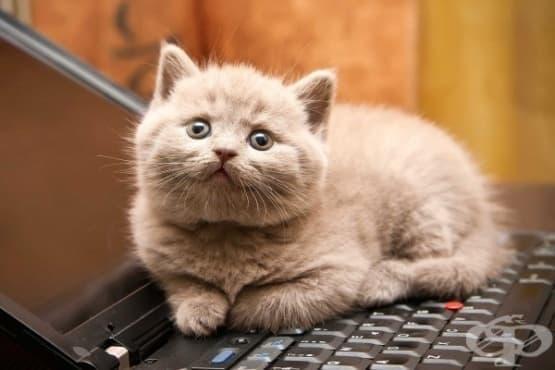 20 сладки факта за котките, които трябва да споделите с вашите деца - изображение