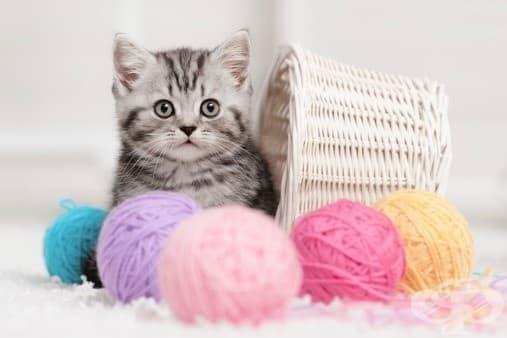 Как да направите хубави снимки на котката си - изображение