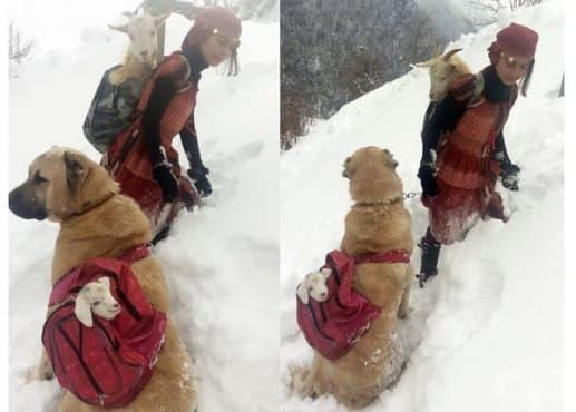 11-годишно момиче пастир и кучето й спасяват коза и яре в планината - изображение