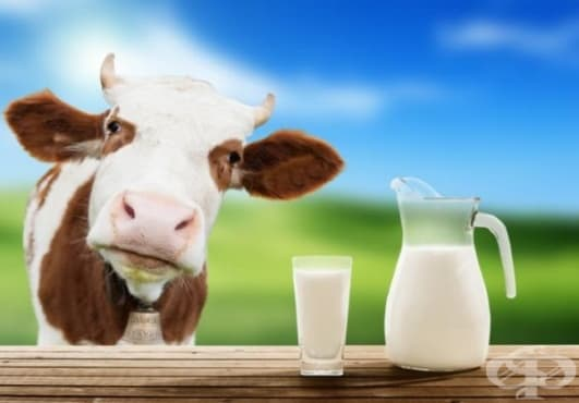 9 факта за краве млякото, които противоречат на общоприетите и ще ви изненадат - изображение