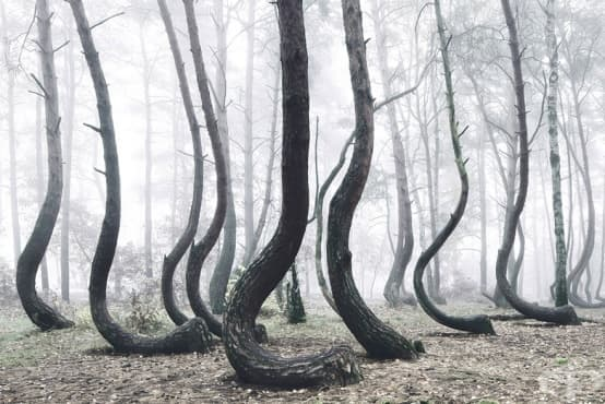 Зловещата крива гора в Полша - изображение
