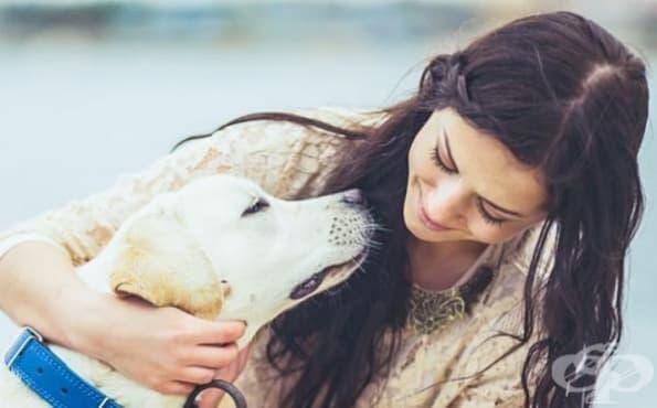 7 неочаквани неща, които кучетата могат да надушат - изображение