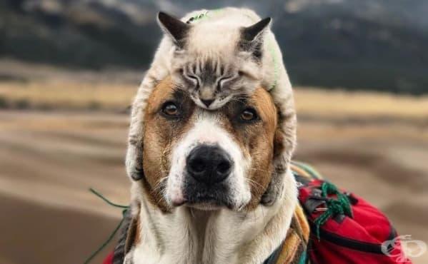Куче и котка – необичайните приключенци, които покоряват планински върхове - изображение