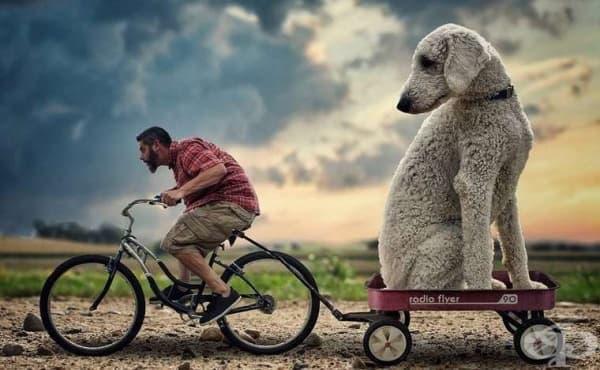 Гигантското куче Джуджи, което впечатли интернет потребителите - изображение