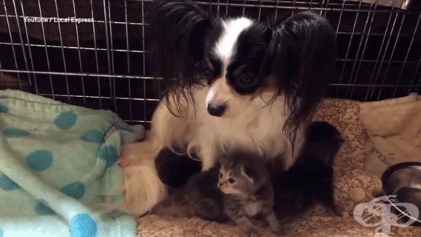Куче осиновява малки котенца, след загубата на собственото си котило - изображение
