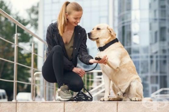 Дългосрочният стрес при кучетата е свързан с отношенията със стопанина им - изображение