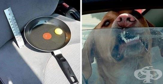 Ето какво се случва с яйце в кола в горещ ден - представете си какво се случва с вашето куче - изображение