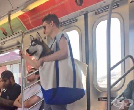 Как в Ню Йорк избягват глобата за куче в метрото? - изображение