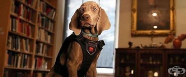 Тримесечно куче ще надушва вредители в музей за изящни изкуства - изображение