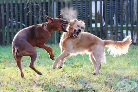 Как да прекъснете кучешко сбиване - изображение