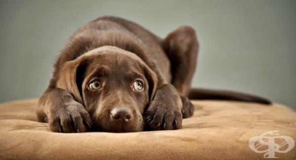 11 неща, които кучетата мразят - изображение