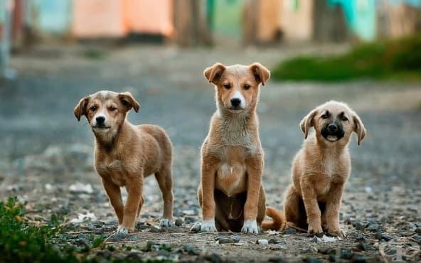 Бездомните кучета от Чернобил с нов шанс за дом в САЩ - изображение