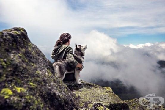 Кучетата усещат човешките емоции - изображение