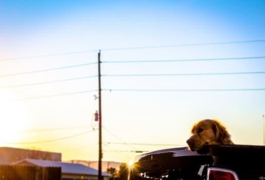 Куче, заключено в кола през лятото: какво да направите - изображение