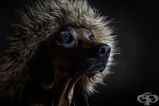 Защо кучетата са страхотни  - изображение