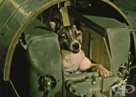 Навършиха се 60 години от изпращането на кучето Лайка в космоса - изображение