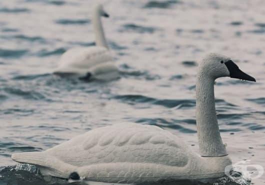 Роботи под формата на лебеди проверяват качеството на питейната вода в Сингапур - изображение