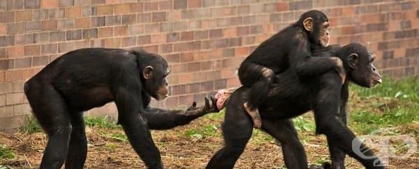 Човешкото лице може би е еволюирало така, че да напомня на маймунско дупе - изображение
