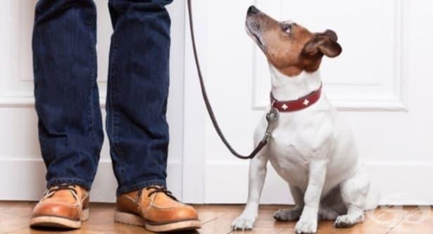 Как да бъдете лидера на групата, от който вашето куче се нуждае – част 2 - изображение