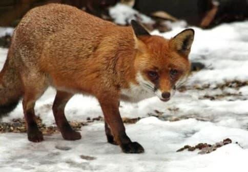 Странни факти за животните, които ще ви натъжат - част 3 - изображение