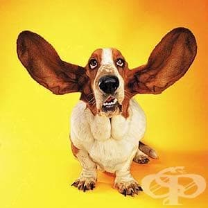 Любопитни факти за кучетата, които може би не знаете - изображение