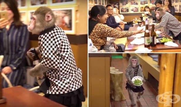 Маймуни работят като сервитьори в японски бар - изображение