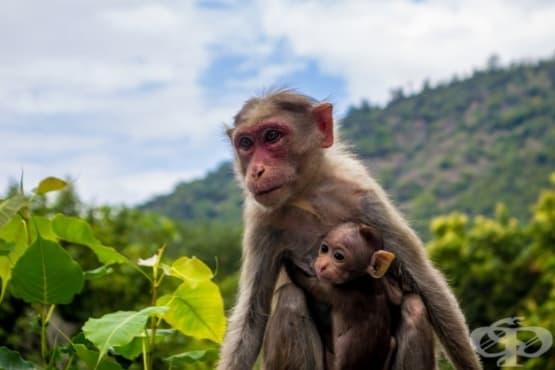 Как влияе наличието на окситоцин при различни видове животни - изображение