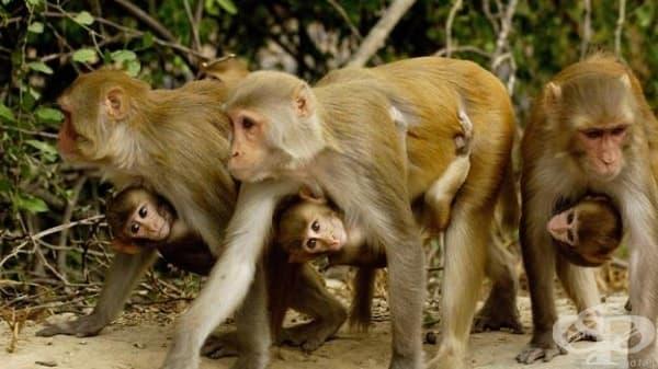 Защо животните нямат месечен цикъл ? - изображение