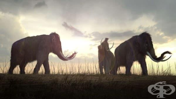 Учени ще възкресяват изчезналите преди хилядолетия мамути - изображение