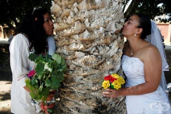 Мексиканки сключват брак с дървета, за да ги спасят от изсичане  - изображение