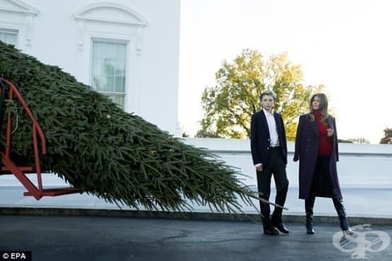 Мелания Тръмп посрещна традиционната шестметрова коледна елха в Белия дом - изображение